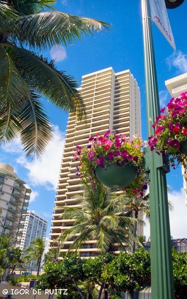 velocità di incontri Oahu Hawaii online dating unicorno